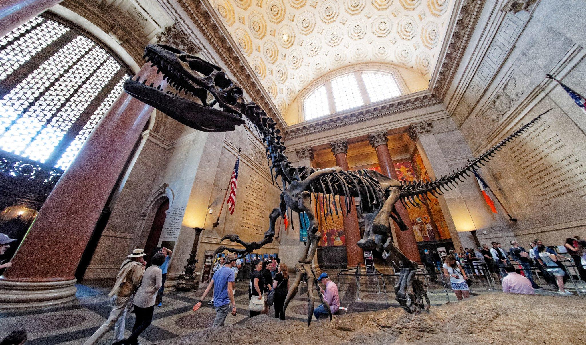 Динозавр в музее естественной истории