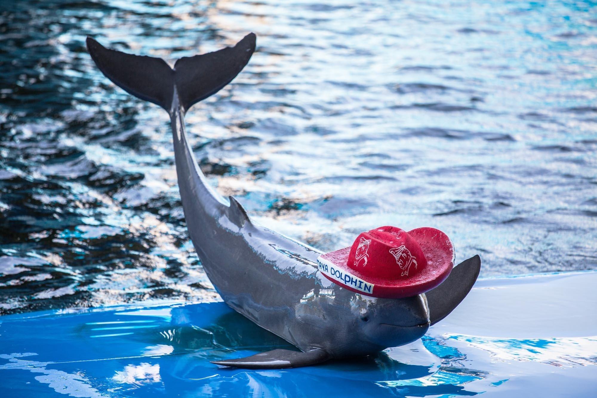 Дельфин в шляпе