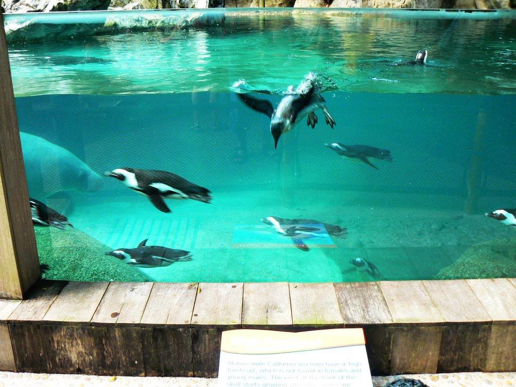 Пингвины в аквариуме