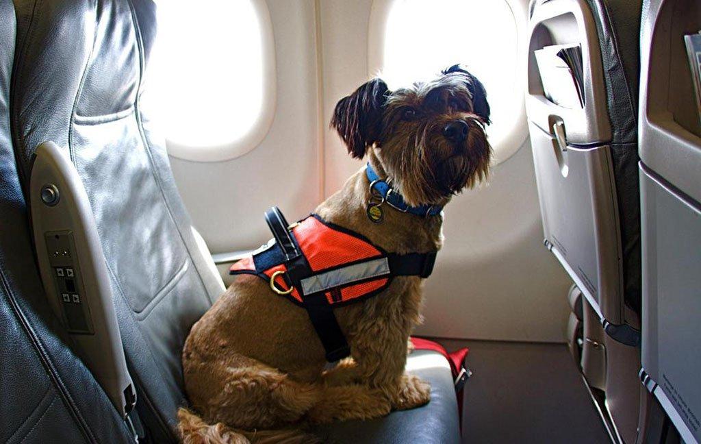 Собака на борту