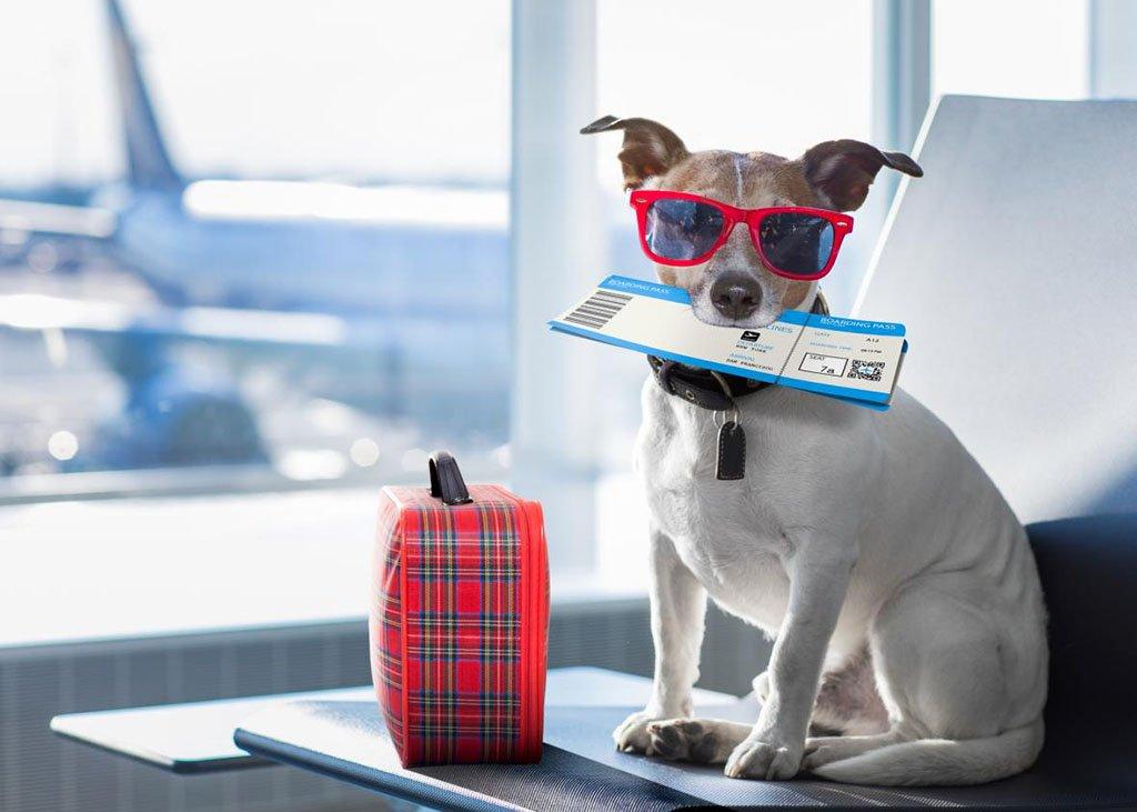Собака с билетом