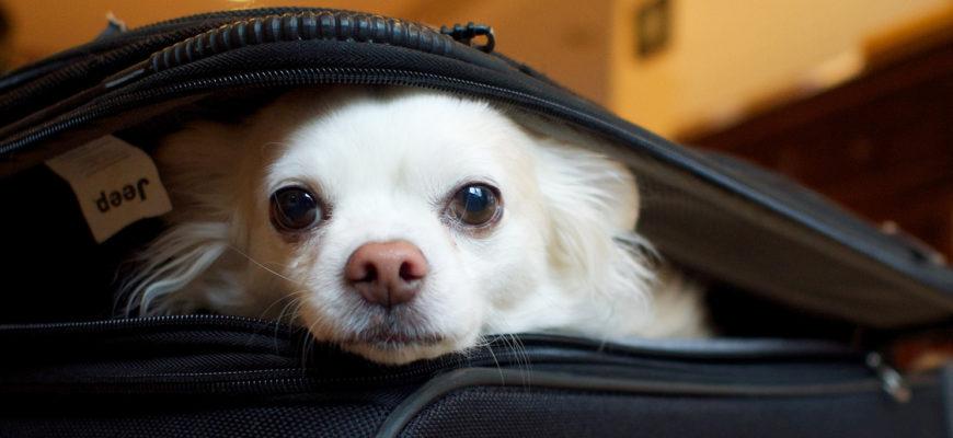 Как перевозить собаку в самолете