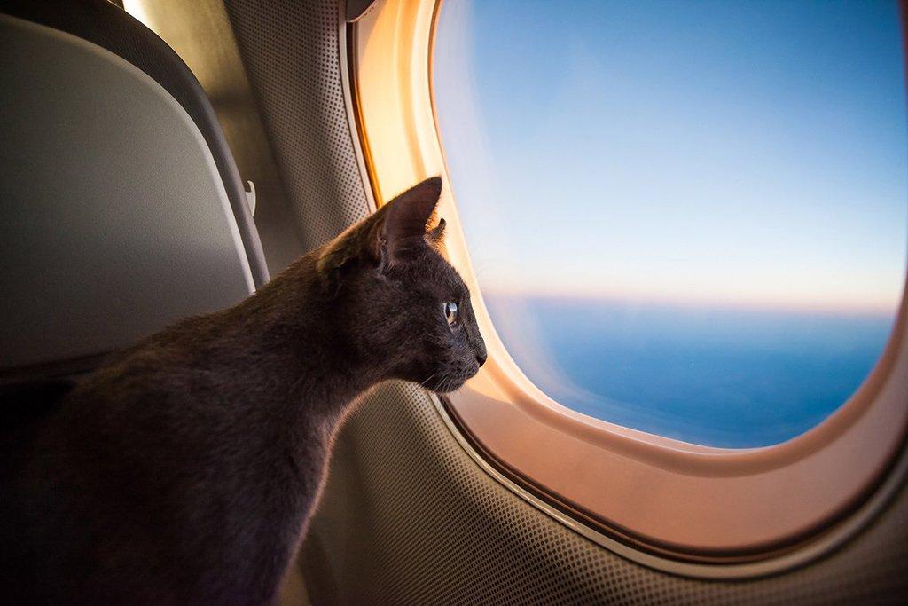 Кошка у иллюминатора