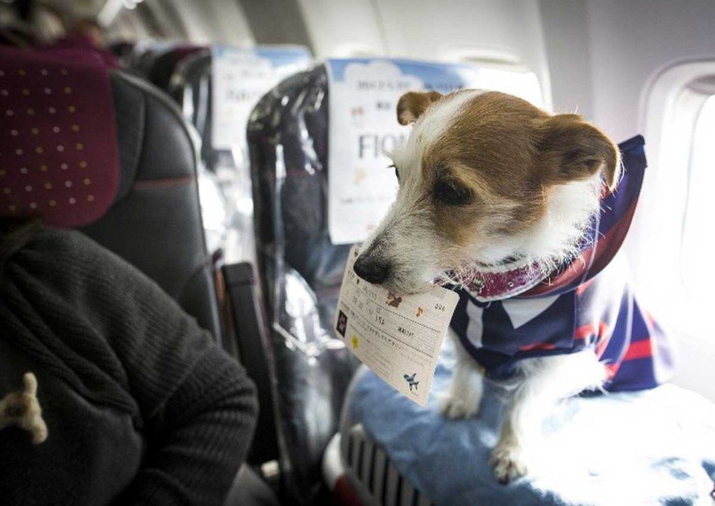 Собачий билет