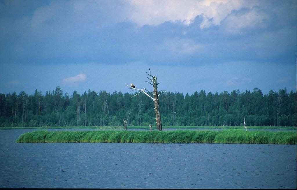 Водлозерский парк