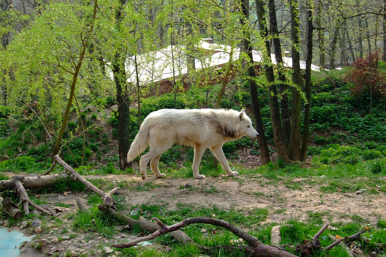 Зоопарк в Брно