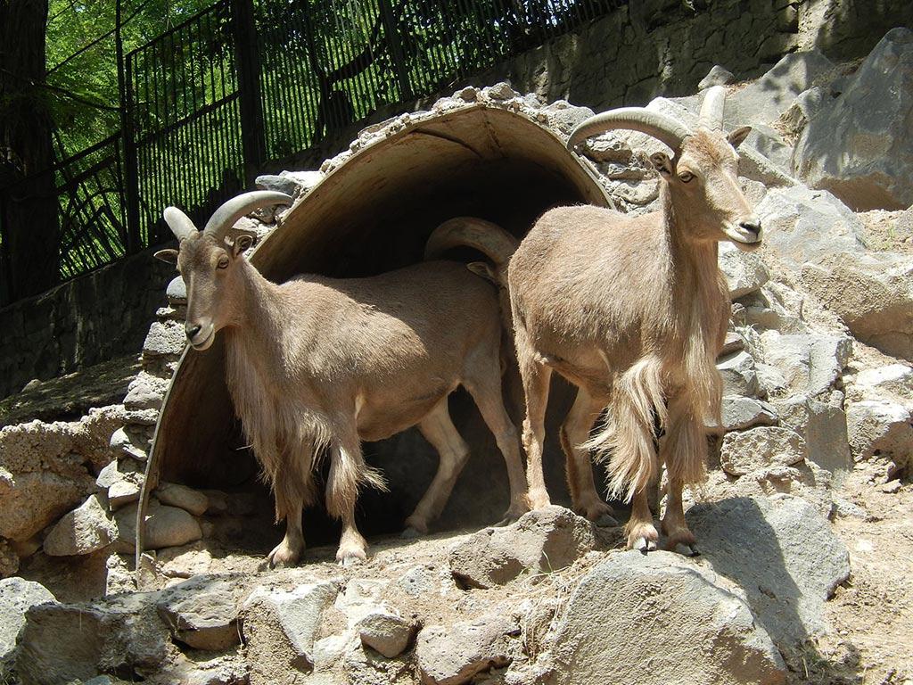 Зоопарк Еревана