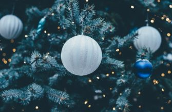 Как продлить жизнь новогодней ёлки